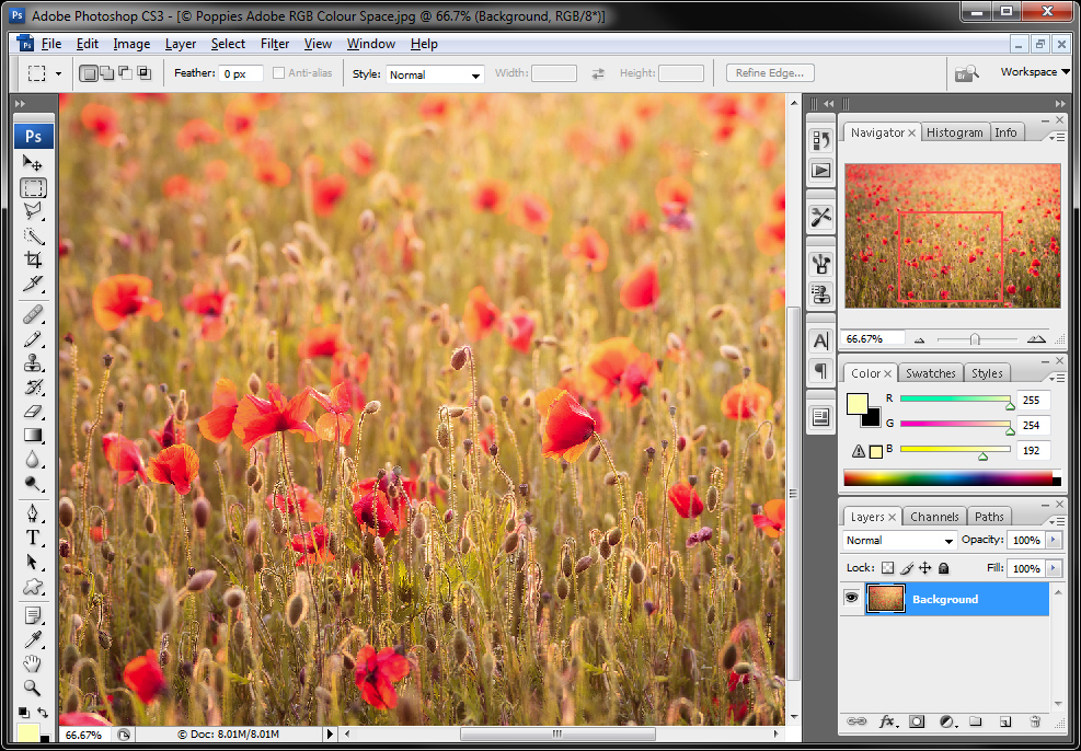 Poppies-Original-Adobe-RGB-Colour-space